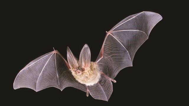 Bat tests positive for rabies virus in York Region