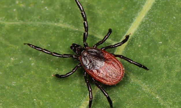 Fall surveillance finds new blacklegged tick