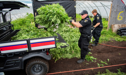 Arrests in $6.5-million cannabis grow-up
