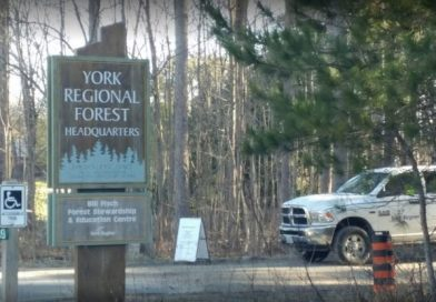 Plan to ensure residents 'cherish, respect' forest